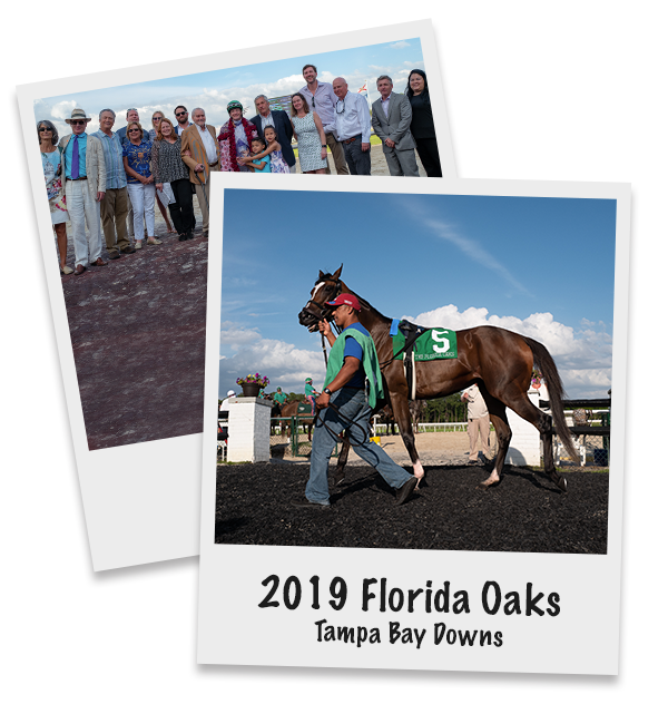 Concrete Rose Takes Control in Florida Oaks