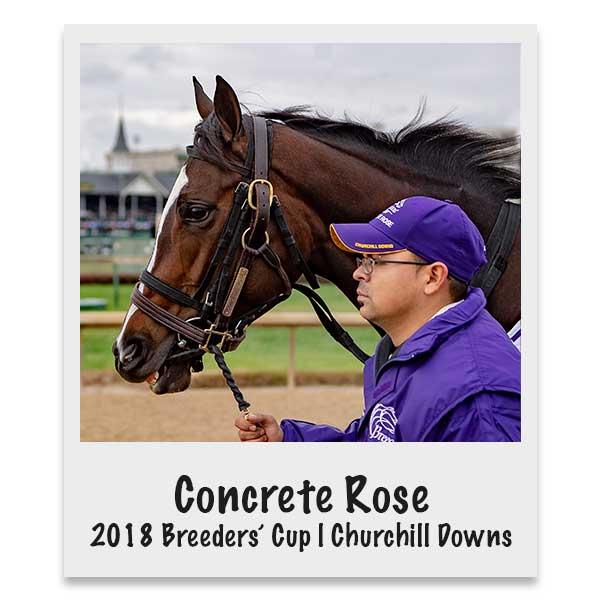 Concrete Rose | 2018 Breeders Cup Classic